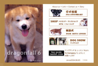 犬の専門店 dragonfall 6